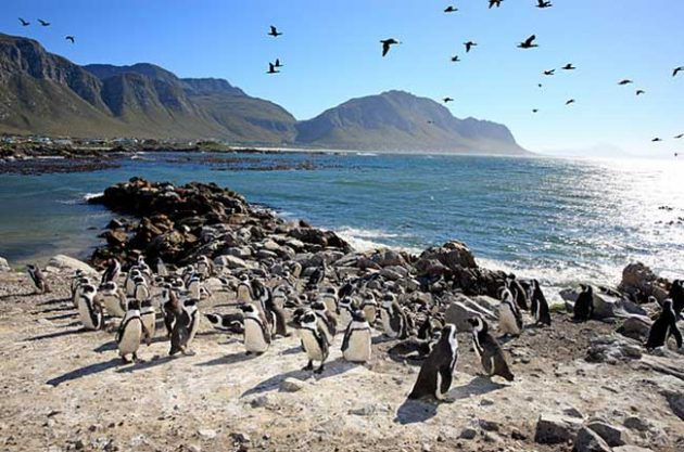 ¡Mis aventuras por Ciudad del Cabo!